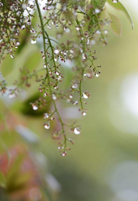 Drops 2