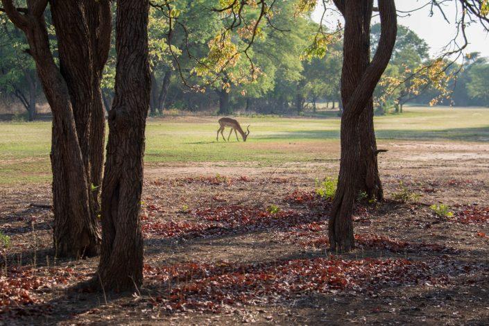 Victoria Falls Golf